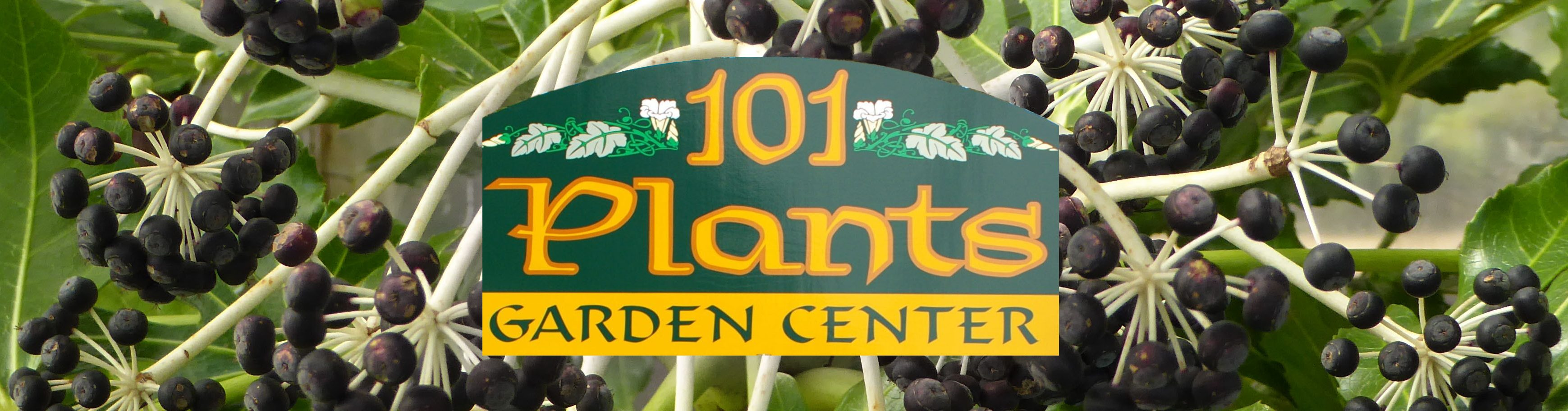 101 Plants & Things